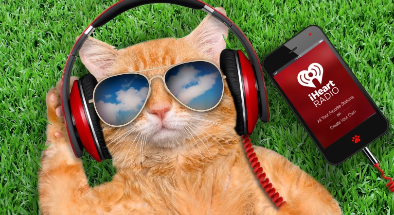 54533622 - cat headphones wearing sunglasses relaxing in the grass.